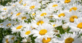 Какие цветы можно посадить осенью под зиму