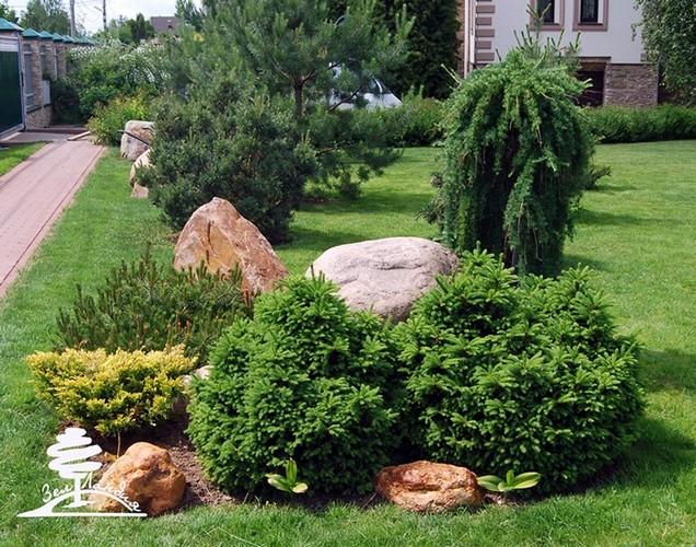 Можжевельник обыкновенный довольно неприхотлив в уходе. Однако внесение удобрений хорошо сказывается на состоянии кустарника. Подкармливать кустарник лучше весной, когда отрастают молодые побеги.