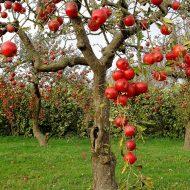 Осенняя обработка плодовых деревьев и кустарников