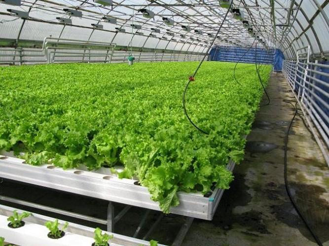 Выращивание как малого бизнеса