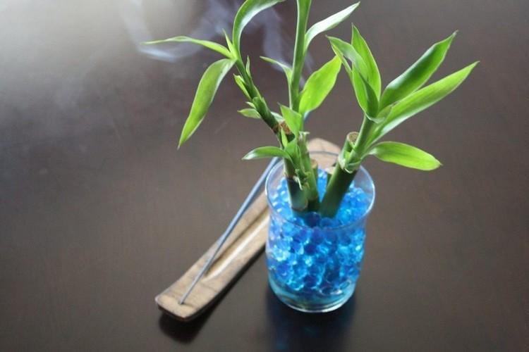 Как размножить драцену в домашних условиях черенками?