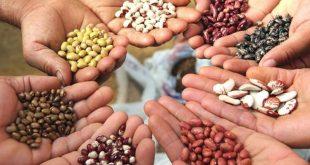 Семена: хранение и обработка