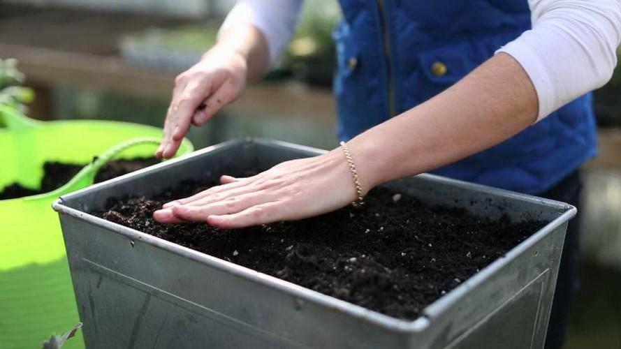 Подготовка семян томатов к посеву на рассаду