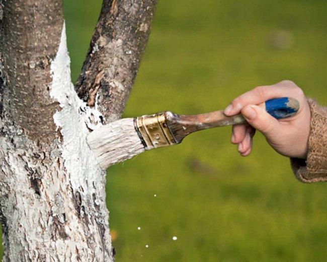 Обработка деревьев и кустарников весной