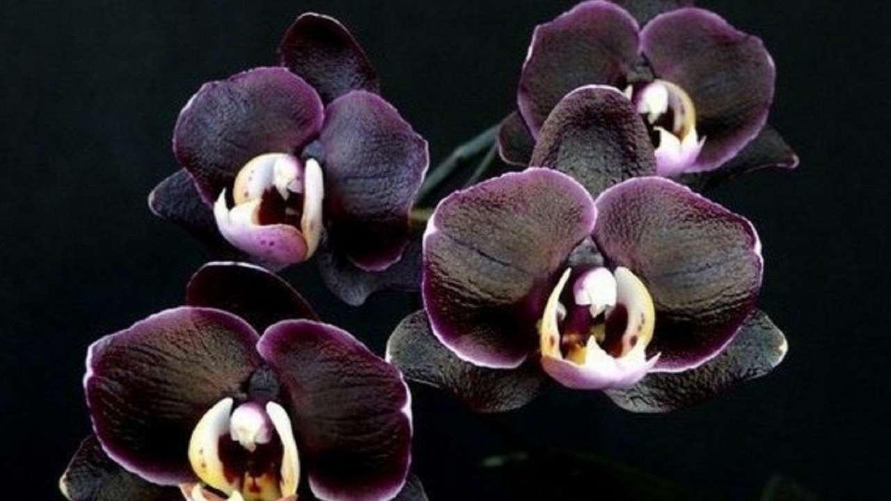 tsvetok-orhideya-v-adlere-kupit-dostavka-tsvetov-v-sochi-tsena-kiev