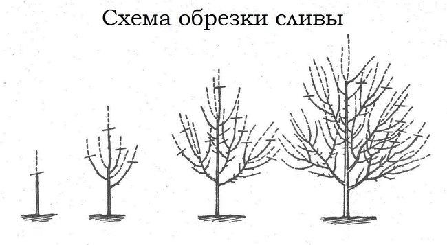 Обрезка деревьев весной видео для начинающих