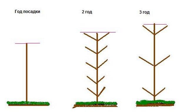 Обрезка колоновидных деревьев весной видео для начинающих