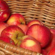 Самые лучшие сорта яблок