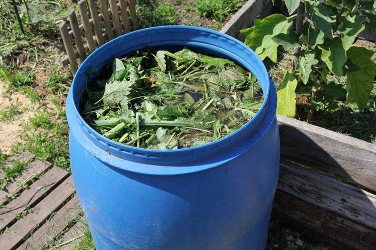 Чем подкормить баклажаны для ростаЧем подкормить баклажаны для роста