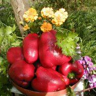 Чем поливать перец для хорошего урожая?