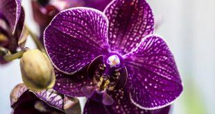 Орхидея: размножение в домашних условиях черенками