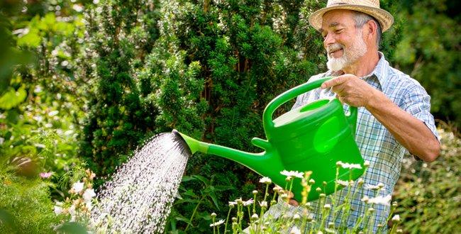 Анемона дубравная травянистые растения для открытого грунта