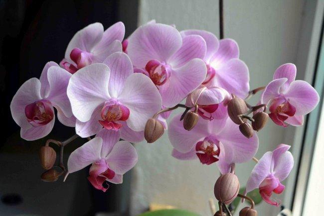 Как ухаживать за орхидеями в домашних условиях в горшке для начинающих