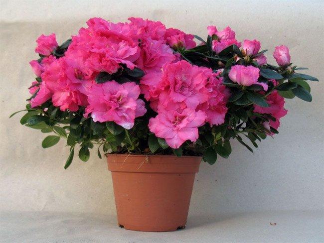 Комнатные цветы которые нельзя держать дома фото