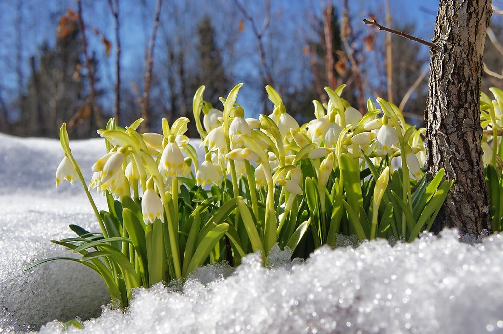 Лунный посевной календарь на февраль 2019 год цветовода