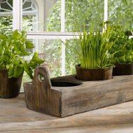 Что можно посадить на подоконнике зимой из зелени?