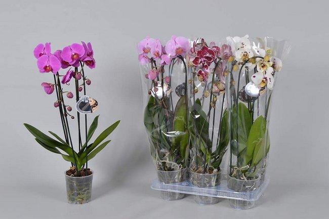 Цветы в горшке в подарок женщине