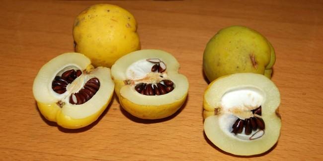 Айва японская плоды как использовать