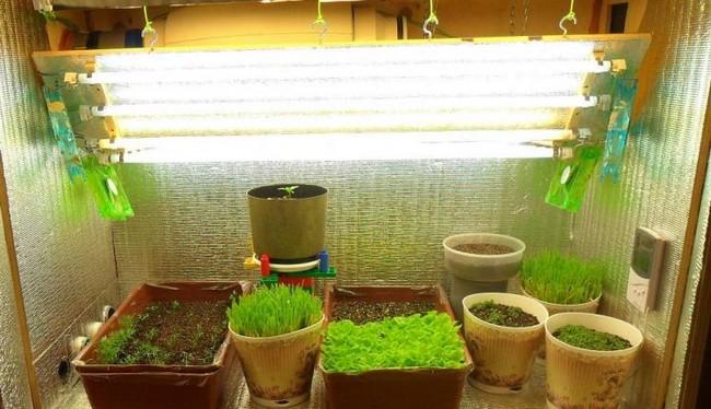 Лампа для выращивания рассады в домашних условиях