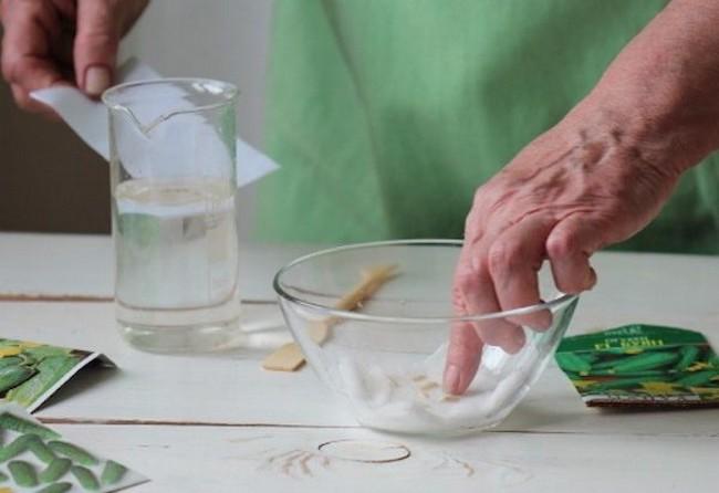 Обработка семян перекисью водорода перед посевом