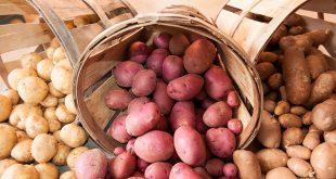 Температура в погребе для хранения картофеля зимой