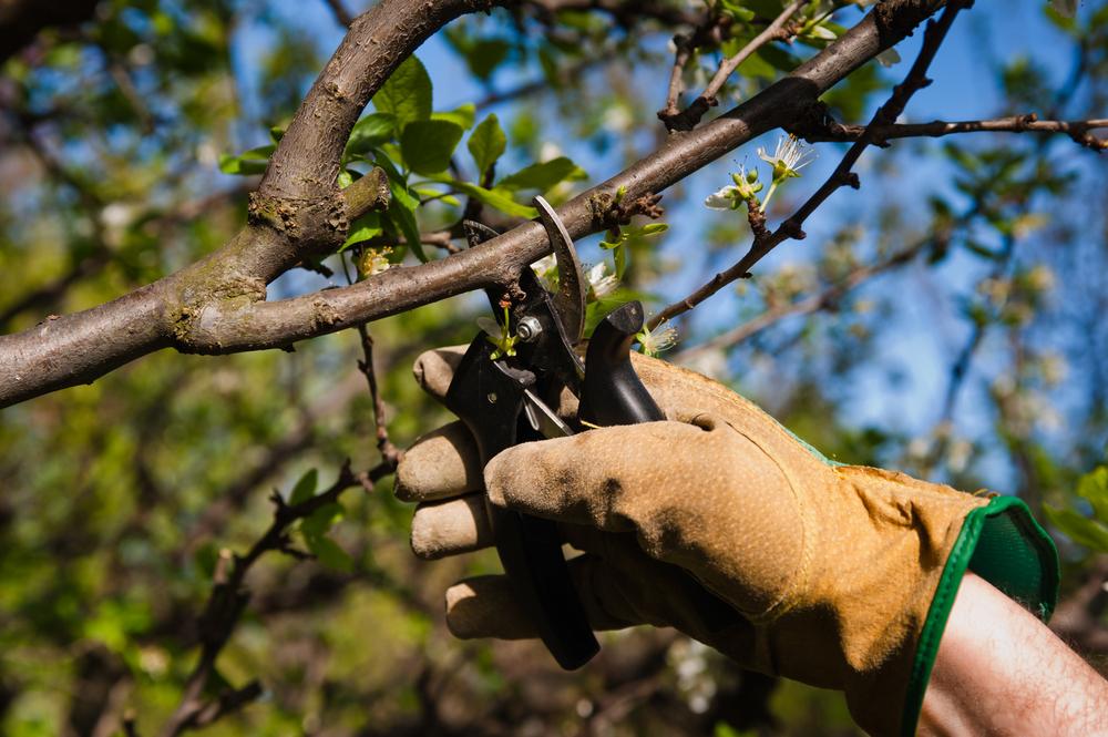Обрезка плодовых деревьев весной как обрезать дерево правильно