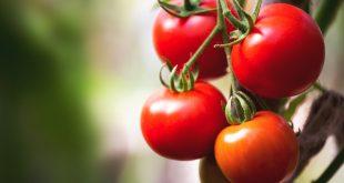 Пикировка томатов в марте 2019 по лунному календарю
