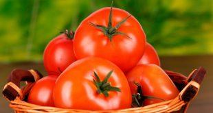 Посадочные дни для томатов в марте 2019 года