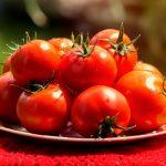 Когда сажать рассаду помидор в 2019 году по лунному календарю