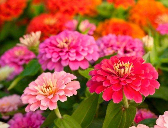 Какие цветы посадить в апреле на рассаду
