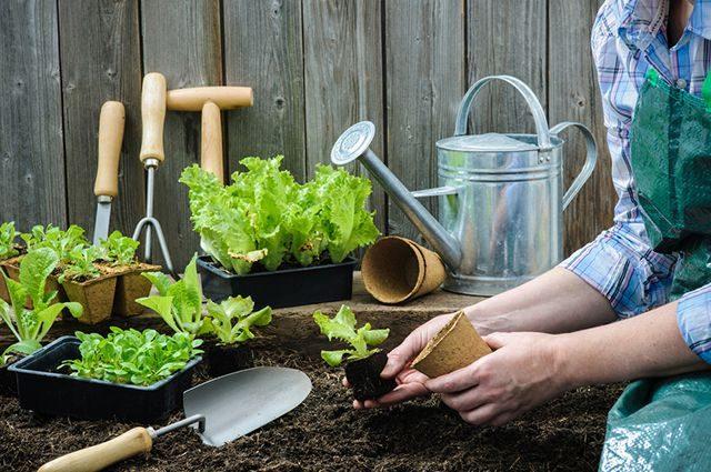 Посадочные дни в мае 2019 года для овощей