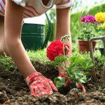 Фазы луны в мае 2019 года по дням для садоводов и огородников