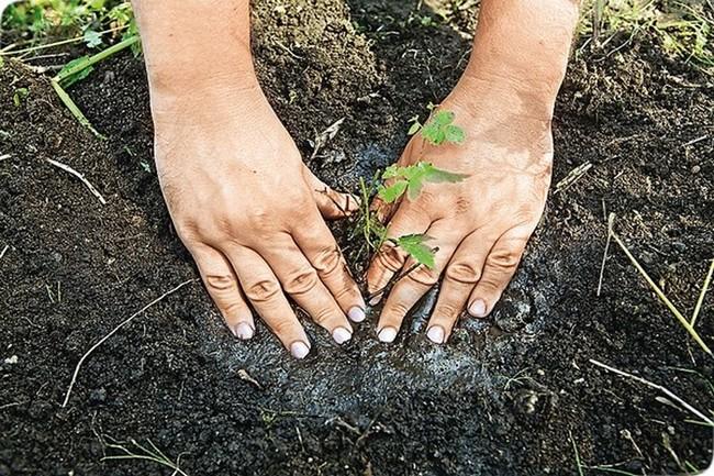 Астильба выращивание и уход фото