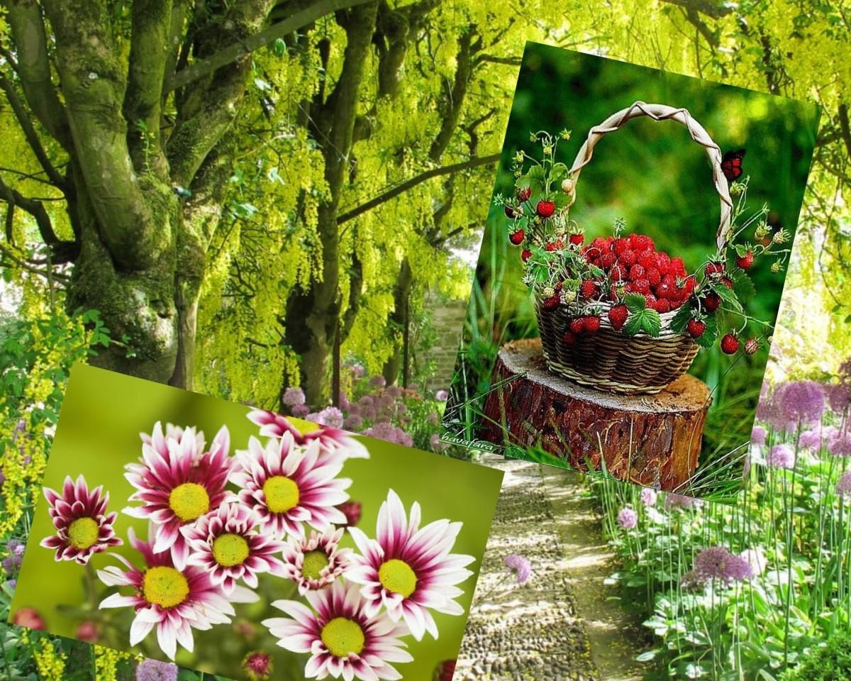 Красивые цветы и лес
