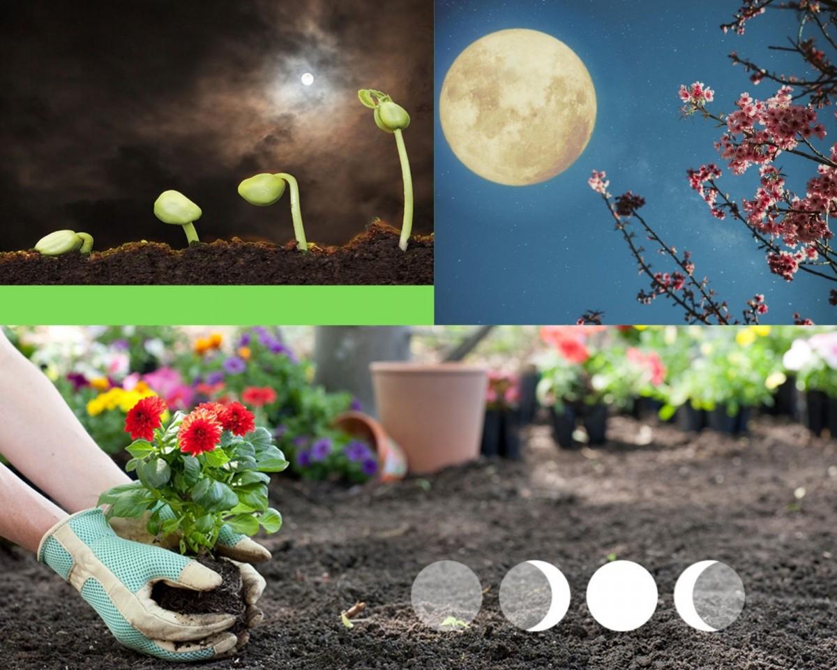 Луна и растущие растения