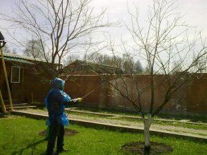 Осенняя обработка сада мочевиной