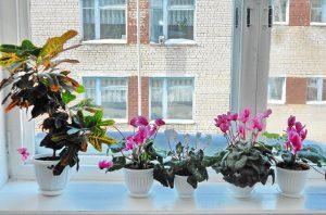 Цветы для школьного кабинет