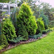 Можжевельники в ландшафтном дизайне: фото, выращивание и советы