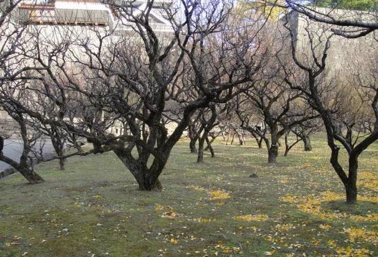 Осенняя обработка плодовых деревьев и кустарников осенью