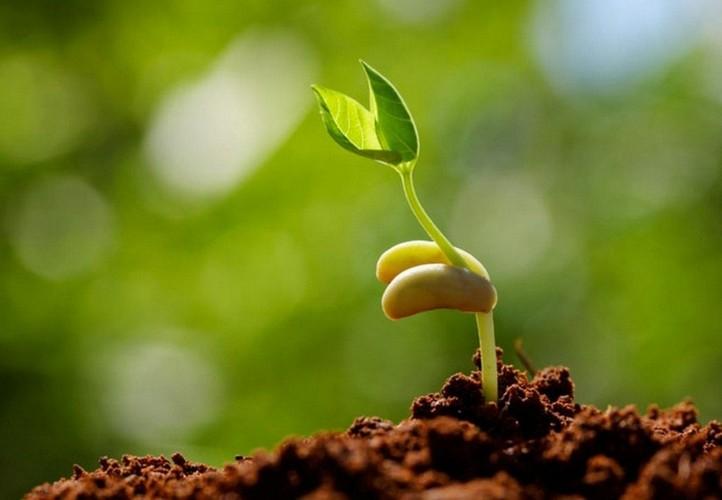 Предпосевная микроволновая обработка семян