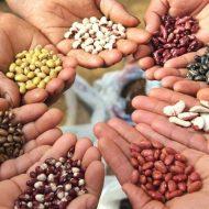 Магнитная обработка семян