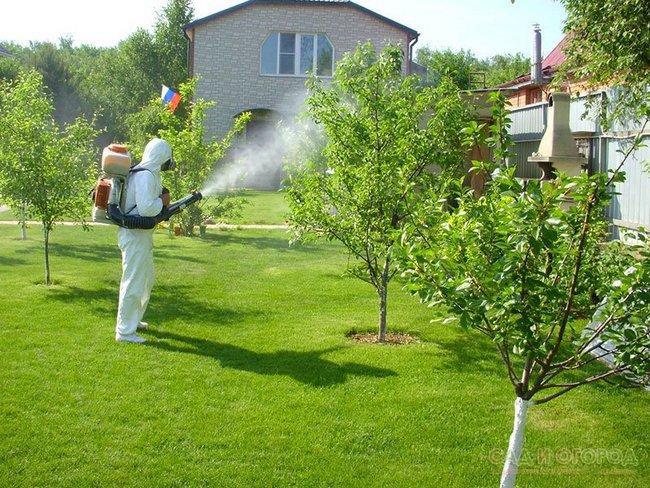 Баковые смеси для обработки сада весной