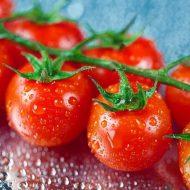 Посев томатов на рассаду в 2021 году