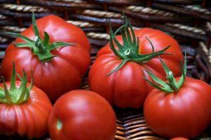 Посев томатов на рассаду в 2018 году