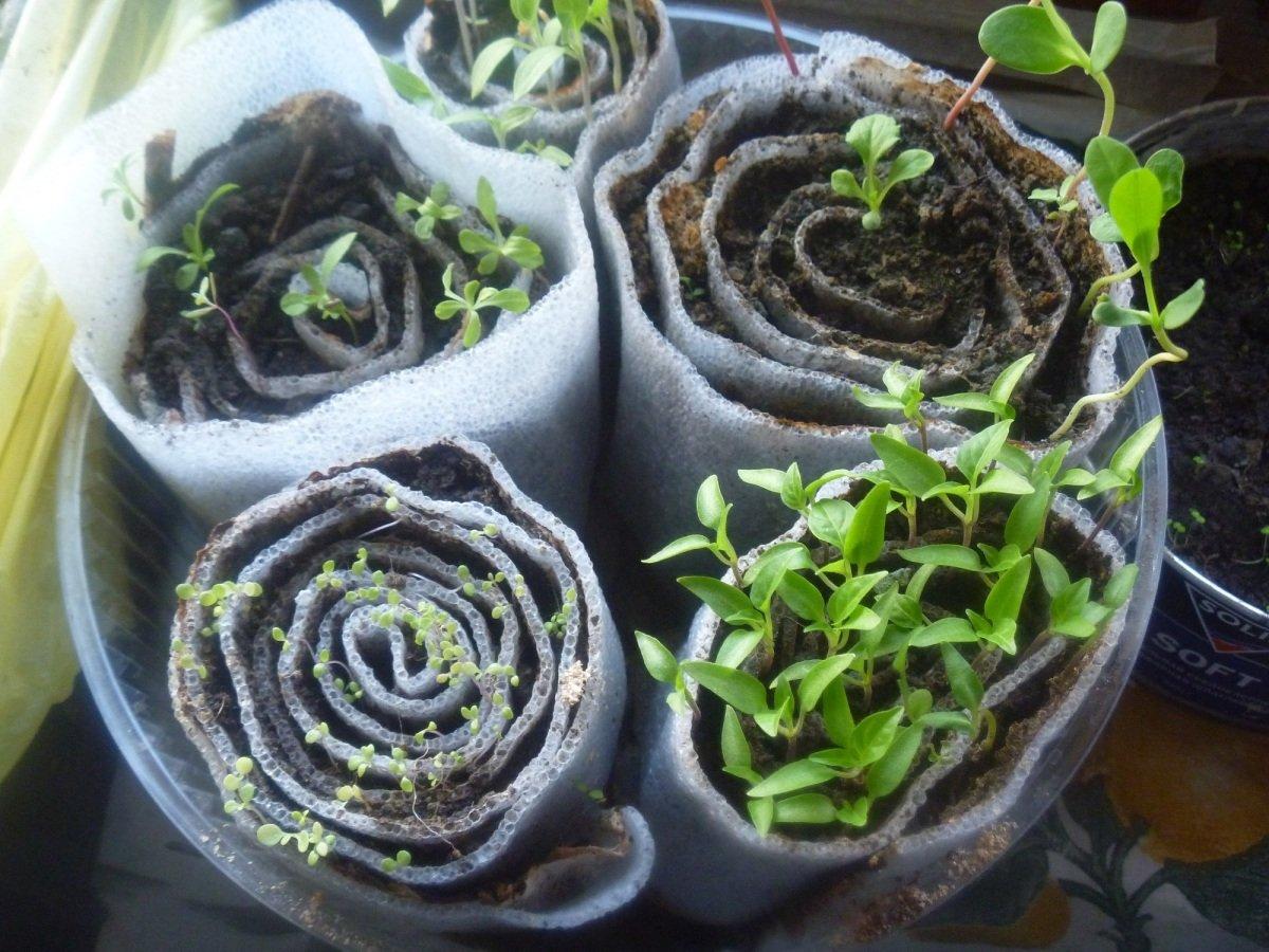 Выращивание рассады в улитках видео
