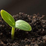 Замачивание семян в воде