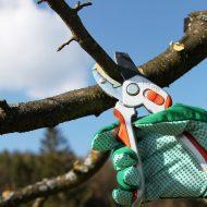 Обрезка деревьев когда лучше осенью или весной