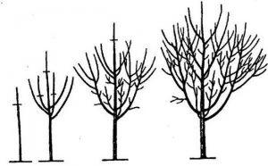 Обрезка деревьев весной видео для начинающих черешня