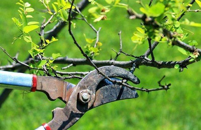 Обрезка деревьев весной видео для начинающих яблоня