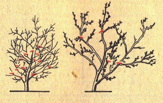 Обрезка деревьев весной видео для начинающих сливы